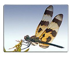 MSD Natural Rubber Placemat IMAGE ID: 218739 Dragon Fly